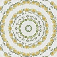 Creamy Yellow Rose Kaleidoscope Art 5