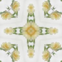 Creamy Yellow Rose Kaleidoscope Art 6