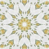 Creamy Yellow Rose Kaleidoscope Art 7