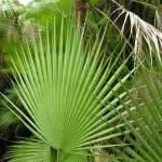 """Jungle Fan"" by SnapitNow"