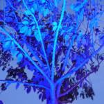 """blue tree"" by englishman"