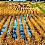 """""""Farm Field"""" by fpearson"""