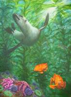 calif sea lion in kelp forest