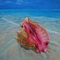 washed ashore-conch shell