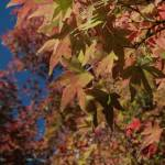 """Fall Foliage II"" by K_Brook_Photography"