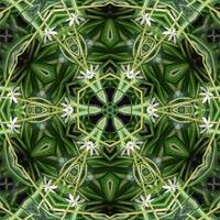 Spider Plant Kaleidoscope Art 1
