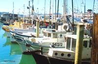 Fishing Boats San Francisco