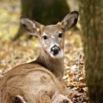 """Deer I"" by offthebeatenpath"