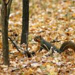 """""""Squirrel I"""" by offthebeatenpath"""