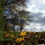 """""""Autumn Horizon"""" by offthebeatenpath"""