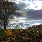 """""""Autumn Horizon II Vert"""" by offthebeatenpath"""