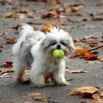 """Puppy"" by offthebeatenpath"