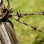 """""""Fenced In"""" by offthebeatenpath"""