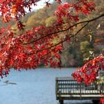 """Red"" by ginak"