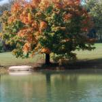 """""""Color version of tree & boat"""" by ashlie_conway"""