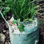 """Antique garden jug"" by ashlie_conway"