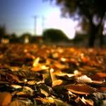 """fall"" by hellgah"