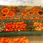 """""""Pumpkins As A Picture"""" by jakeof"""