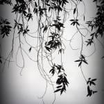 """tendrils"" by Nikki11"