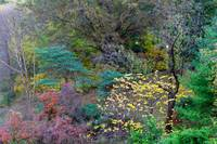 Colors of Central Park in autumn