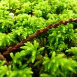 """""""Moss"""" by AndrewJames"""