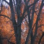"""""""Fall Foliage 1"""" by magicdoll"""