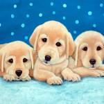 """3pups"" by CarolNesbitt"