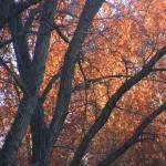"""""""Fall Foliage"""" by magicdoll"""