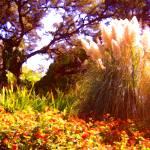 """Garden Landscape"" by AmyVangsgard"