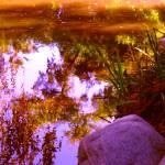 """Pond Reflextions"" by AmyVangsgard"
