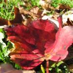 """Autumn leaf"" by feibaobao"