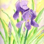 """An Iris for Deloris"" by Christella"