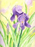 An Iris for Deloris