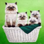 """basket of himalayan kitties"" by CarolNesbitt"