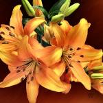 """Tiger Lilies Var 2"" by markwhitesell"
