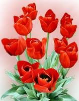 Tulips-Red #2