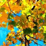 """Autumn in New York"" by LockeStudio"