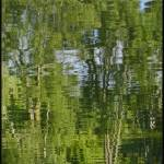 """Reflections of Tall Trees"" by PhotographsByCarolFAustin"