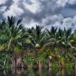 """Palms along the Miami River"" by NjordPhotography"