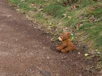 Bear on a forest path 2