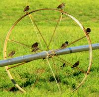 Birds On A Wheel