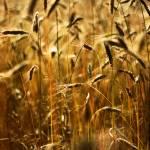 """""""Golden Braids"""" by oneunderthesun"""