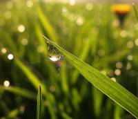 Nature created dew to look at herself in the mirro