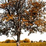 """Autumn Tree"" by andrius"