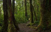 Path to Manoa Falls 2