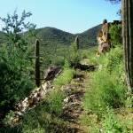"""Wasson Peak Path"" by LivingGaia"