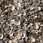 """Shells"" by LivingGaia"