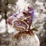 """""""Cecropia Moth"""" by Lilykins"""