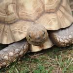 """""""tortoise"""" by jkclark213"""