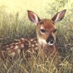 """Fawn"" by janetsart"